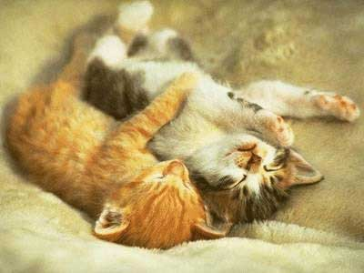 Sweet Love Pictures on Cute Kittens Playing Picture